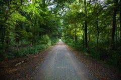绿色森林小径 免版税库存图片