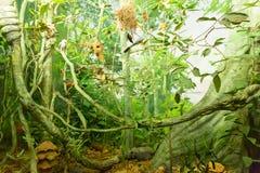 绿色森林微型模型  图库摄影