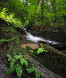 绿色森林背景。自然有热带树的密林公园 免版税库存照片