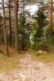 绿色森林道路 库存照片