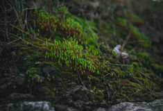绿色森林青苔在早期的春天 唤醒本质 免版税图库摄影
