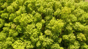 绿色森林顶视图在春日 库存照片