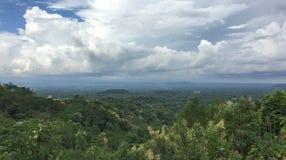 绿色森林晴天在Jogja,印度尼西亚 免版税库存图片