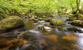 绿色森林围拢的小河, glencree谷,爱尔兰 免版税图库摄影