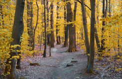 黄色森林 免版税图库摄影