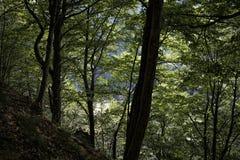 绿色森林 库存照片