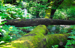 绿色森林 库存图片