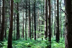 绿色森林 免版税库存照片