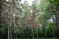 绿色森林 图库摄影