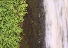 绿色植物、岩石和瀑布构成 免版税库存图片