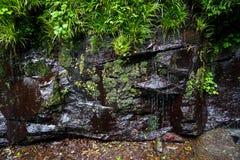 绿色植物、青苔和地衣在岩石墙壁上有瀑布的在醉汉 免版税图库摄影