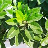 绿色植物分支秋天季节的 土耳其在11月 免版税库存图片