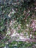 绿色植物和墙壁 库存照片