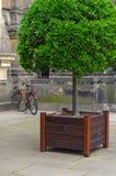 绿色植物和树在木boxe与花束fasade或墙壁在边 免版税图库摄影