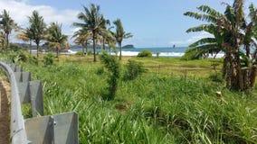 绿色植物和海滩 库存图片