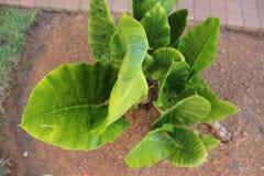 绿色植物在南非 免版税图库摄影