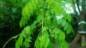 绿色植物在庭院里 库存照片