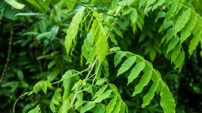 绿色植物在庭院里 免版税库存照片