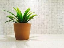 绿色植物在明亮的厨房里 免版税库存图片