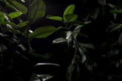 绿色植物在晚上 库存图片