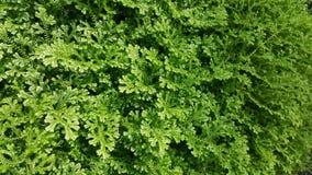 绿色植物在香港庭院里 免版税库存图片