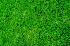 绿色植物墙壁 库存图片