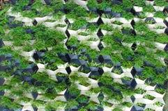 绿色植物墙壁 免版税库存图片