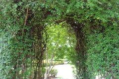 绿色植物曲拱在大庭院,背景里 图库摄影