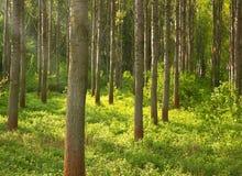 绿色植物盖的森林沼地用阳光来 库存图片