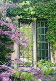 绿色植物盖的老砖瓦房窗口  库存照片