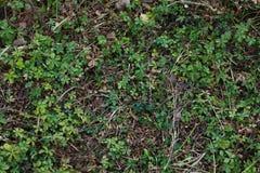 绿色植物纹理在地面上的 库存照片