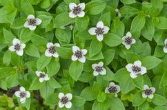 绿色植物背景有小白花的 库存照片