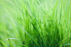 绿色植物能量概念 草背景,宏观看法 软绵绵地集中 浅深度的域 图库摄影
