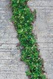 绿色植物草 免版税图库摄影