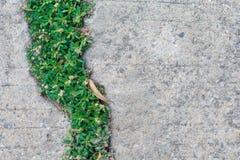 绿色植物草 免版税库存照片