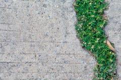 绿色植物草 库存图片