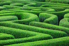 绿色植物迷宫 免版税库存图片