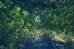 绿色植物隧道,舒展入距离路轨 免版税库存图片