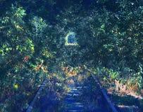 绿色植物隧道,舒展入距离路轨 库存照片