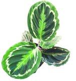 绿色植物,看法从上面 免版税库存照片