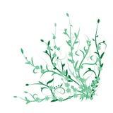绿色植物,花 免版税库存照片