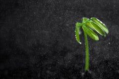 绿色植物年轻人 库存照片