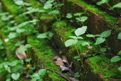 绿色植物从砖台阶增长 免版税库存照片