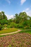 紫色植物 图库摄影