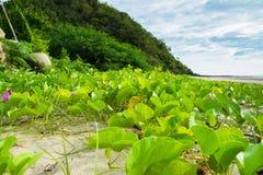 绿色植物 库存图片