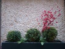 绿色植物 免版税图库摄影