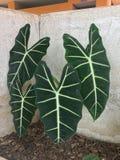 绿色植物 免版税库存图片