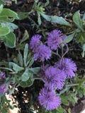 紫色植物 库存照片