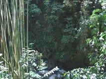 绿色植被在密林 竹热带 影视素材