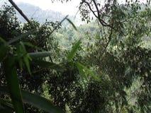 绿色植被在密林 竹热带 股票视频